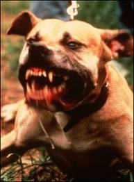 Dog attacks humans, it's the owner, not the breed! | Rightways