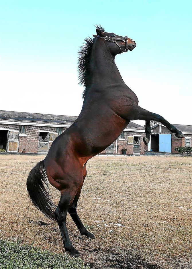 Horse yr 2014
