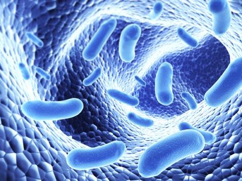 Antibiotic Resistance_bacteria