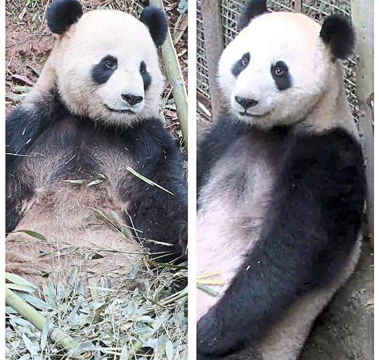 Pandas_Wu Fa-Feng Yi