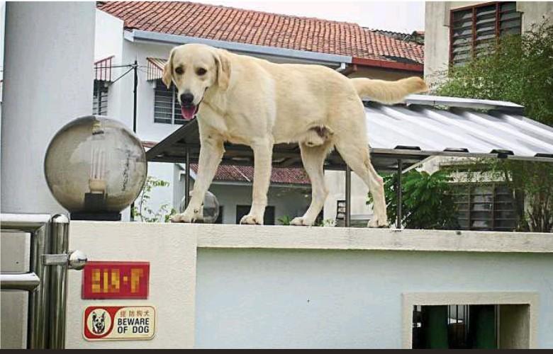 House_Burglar-proof_dog